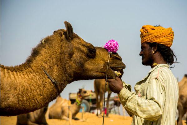 2018 ST 78 Parth Gandhi 1 Pushkar Camel Fair